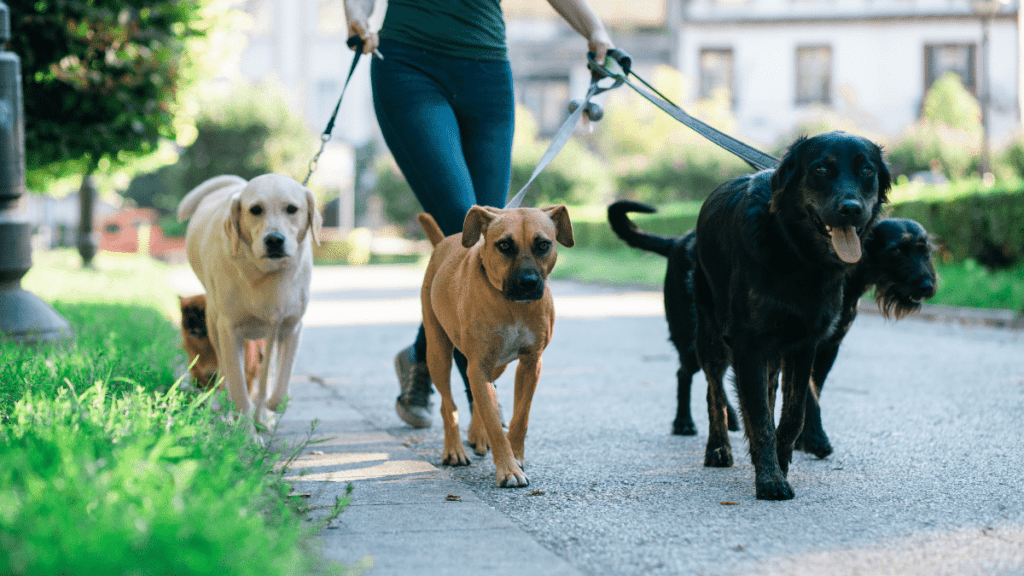 only things you need to start a dog walking business